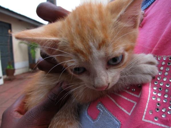 cat in ghana