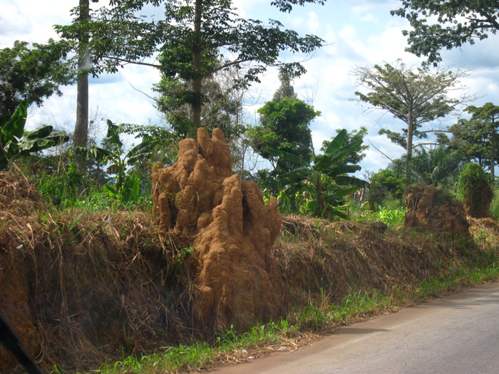 termite mound in norther Cote D'Ivoire
