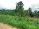 bush ghana