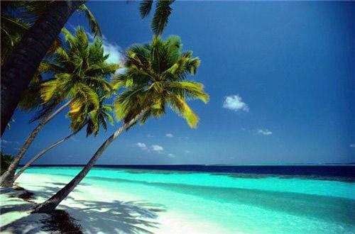 tropicalbeachlargeformat