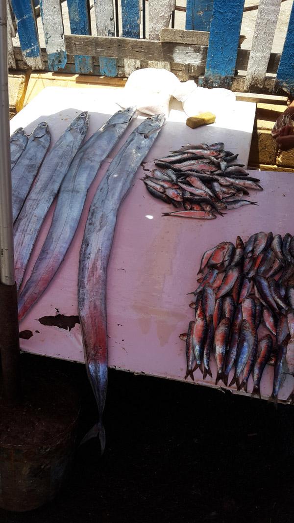 longfishessaouira