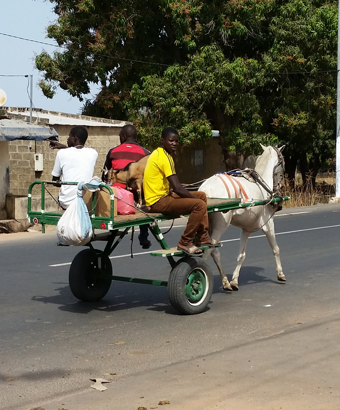 goat-on-donkey-cart